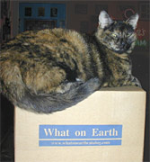 Eartha Kitty