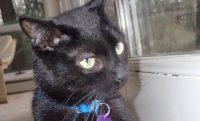 Kittiesue