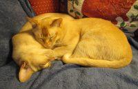 Aubrey & Percy