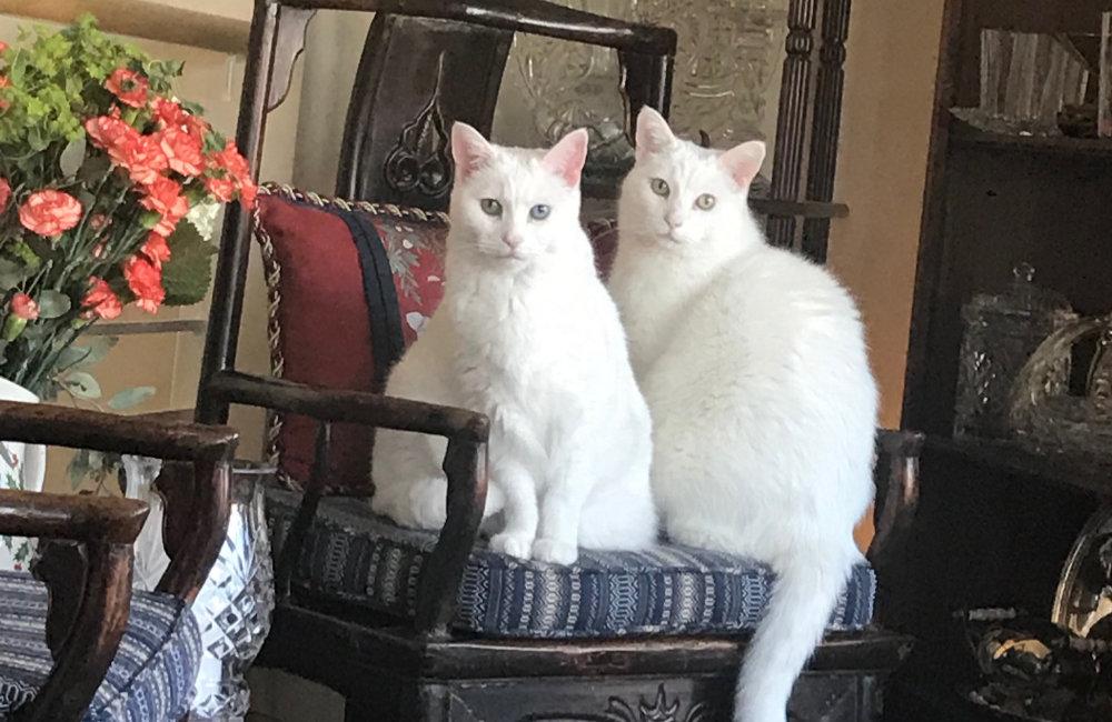 Dutchess & George